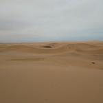 念願のナミブ砂漠。大満足の半日ツアー